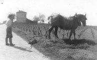 le labour avec le cheval