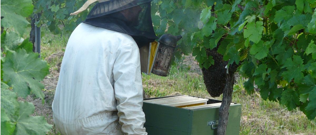 Permalien à: L'essaim d'abeilles