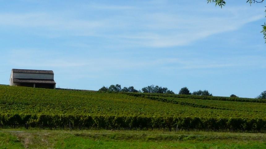 le vignoble de Genibon en Côtes de Bourg, au cœur des Grands Vins de Bordeaux