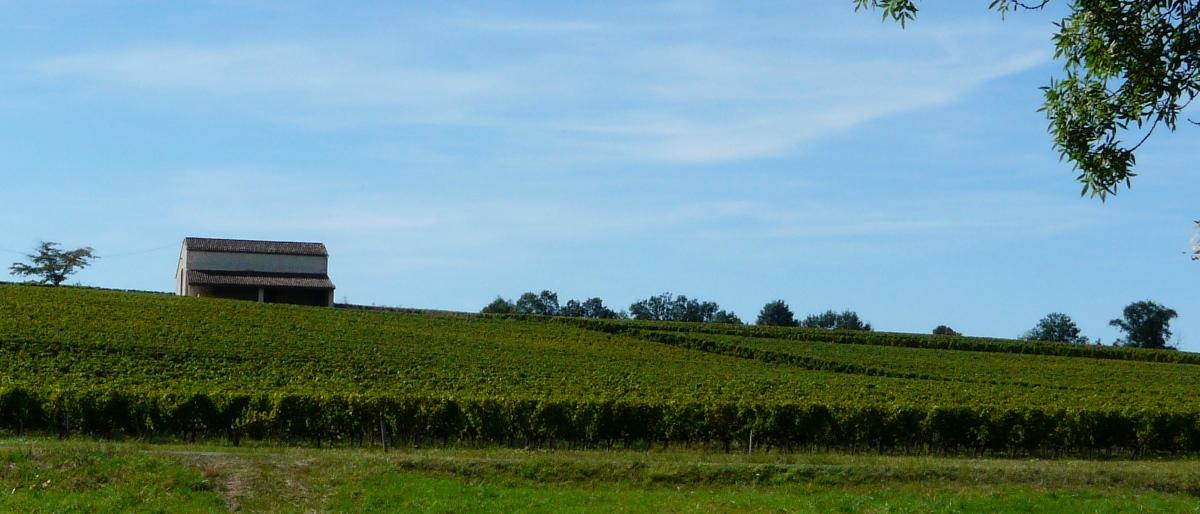 Permalien vers:Le vignoble de Genibon