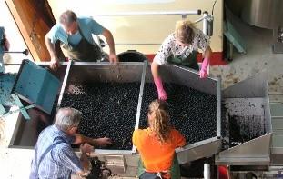 Permalien vers:De la vigne au chai : un travail d'équipe